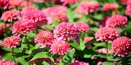 Grow Your Own Cut Flower Garden tickets