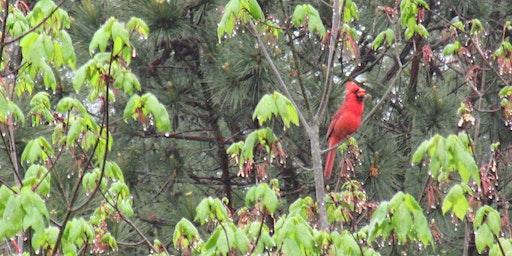 Birding Basics; National Trails Day