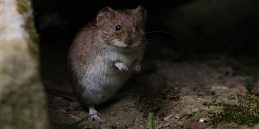 An Introduction to Small Mammal Monitoring