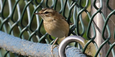 RSPB What's that Warbler? Guided Walk tickets