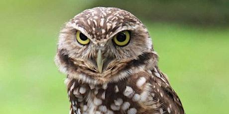 Owl Adaptations tickets