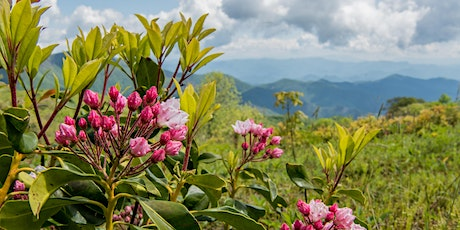 Laurel, Ivy and Dog Hobble: The Plant Life of Southern Appalachia tickets
