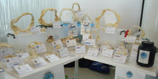 Sharklab Malta - MNA Awareness Activity - for SOK STUDENTS ONLY