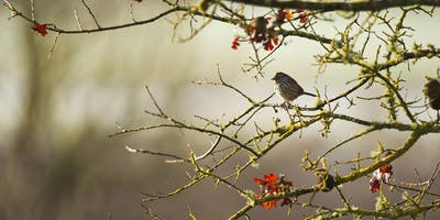 Birds of the Laguna de Santa Rosa Presentation by Denise Cadman