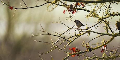 Birds of the Laguna de Santa Rosa Presentation by Denise Cadman tickets