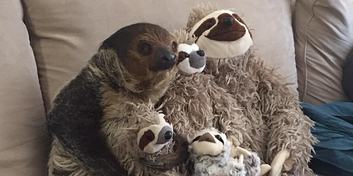 An Evening with Steve the Sloth