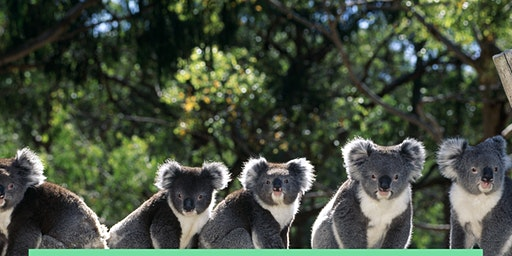 Train for the Koalas!