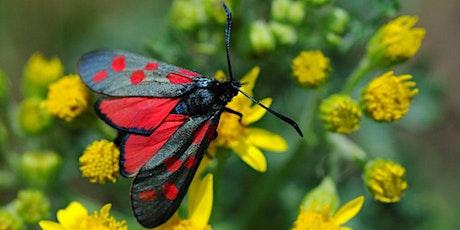 RSPB Moth ID Morning (Free!) tickets
