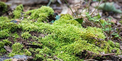 Woodland Mosses for Beginners