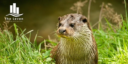 Otter guided walk and talk along River Leven in Fife