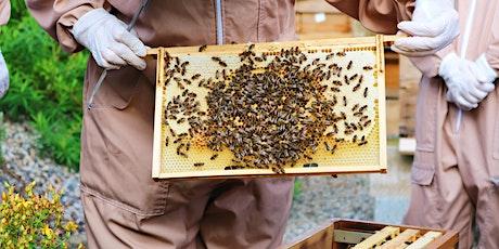 5 Week Practical Beekeeping Course / Cwrs Cadw Gwenyn Ymarferol 5 Wythnos tickets