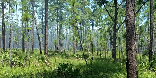 Florida Land Steward Workshop: Longleaf Pine Forest Restoration and Management
