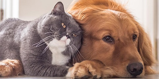 Essential Oils for Dogs and Cats