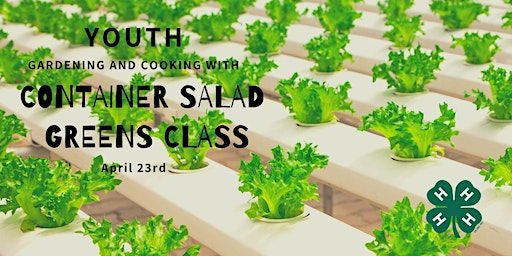 Gardening and Cooking: Youth Container Salad Greens