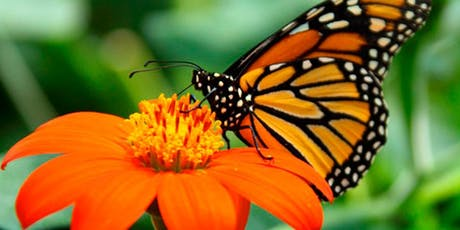 Spreading the Love of Butterflies - How to Become a Monarch City tickets