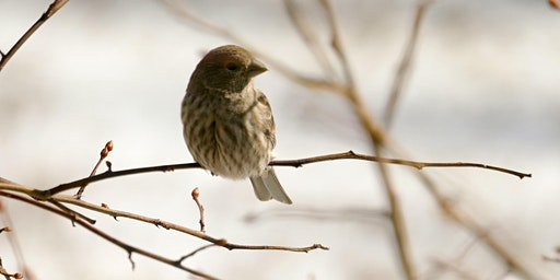 All About Winter Birds