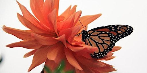 Foundations in Gardening: Secret World of Wildlife