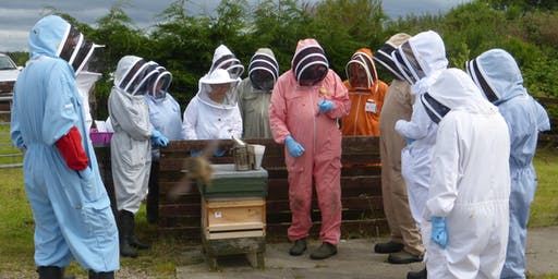 Introduction to Beekeeping course, 7 June