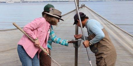Naturalist Workshop: The Intertidal Zone tickets