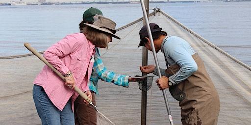 Ecotour Workshop: The Intertidal Zone (Charleston)