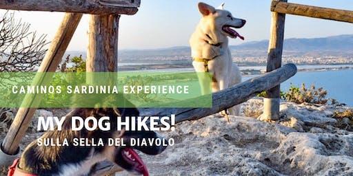 Dog hiking! Passeggiata a 6 zampe con i nostri cani sulla Sella del Diavolo.