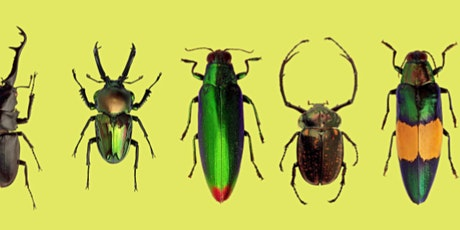 4-H Art with Insects Workshop tickets