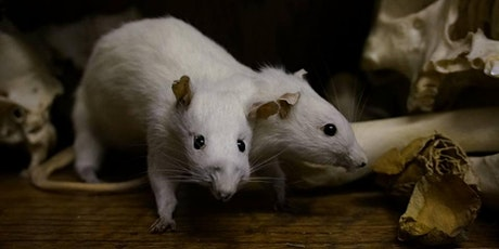 Rogue Taxidermy - rat with two heads or rat with wings tickets