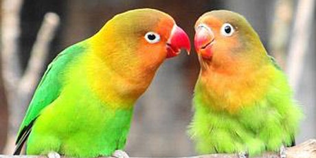 Lovebirds and Bubbles Taxidermy Class - Valentine's Special tickets