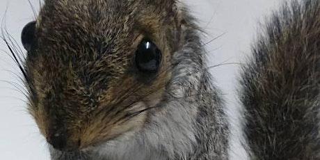 Squirrel Taxidermy tickets