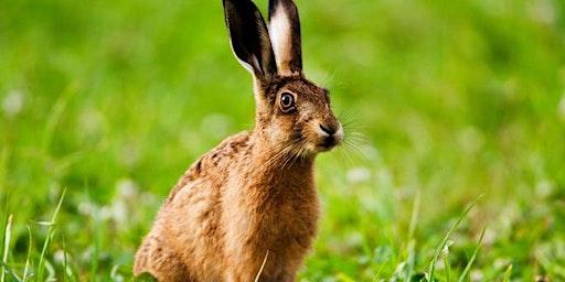 Full Hare or Fox Cub Taxidermy
