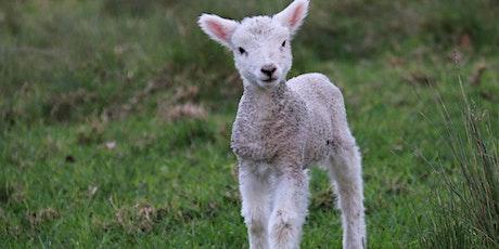 Lamb Taxidermy tickets