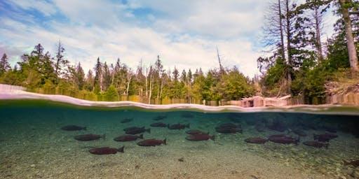 Autumn Salmon Walk