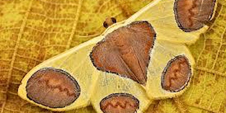 Moth Setting & Mounting tickets