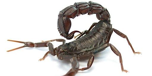 Scorpion & Centipede Setting Class