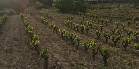 Wine Class - Catalonian Class tickets