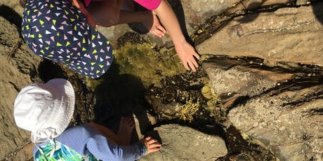 Twilight Rockpool Ramble 12 January 2020 - Lorne tickets