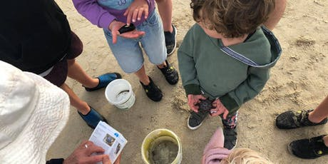 Fossil Safari 17 January 2020 - Aireys Inlet tickets