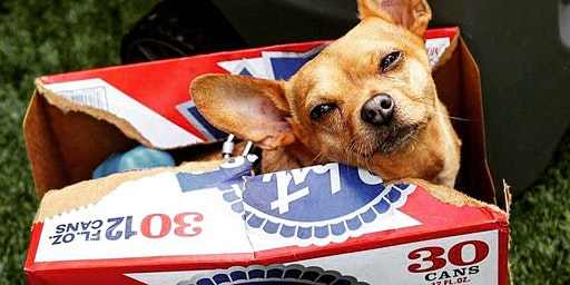 Pabst Dog Days