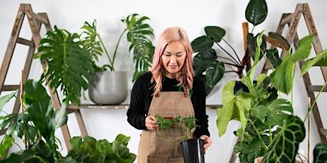 Watsons Bay Tea Topics: Beginner's Guide to Indoor Plants Workshop tickets