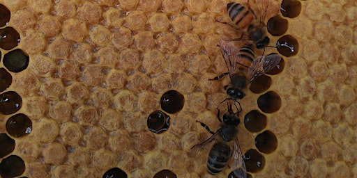 A one day course on Beekeeping for Beginners - 2020