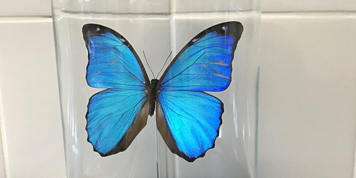 Butterfly Mounting in dome