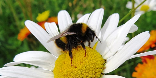 An Introduction to Bumblebees