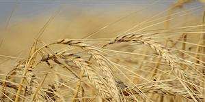 9th Canadian Barley Symposium & 24th BMBRI Triennial...