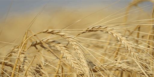 9th Canadian Barley Symposium & 24th BMBRI Triennial Meeting