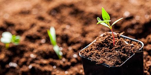 Starting Seeds Inside & Outdoors