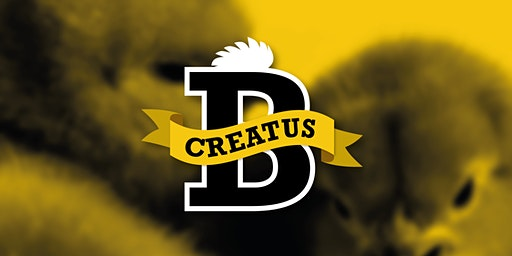 Creatus BETA