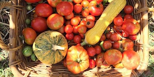 Seed Saving Summer Vegetables