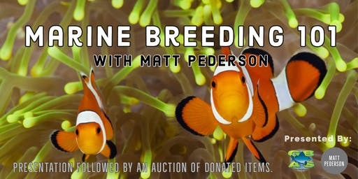 Marine Breeding 101 with Matt Pedersen