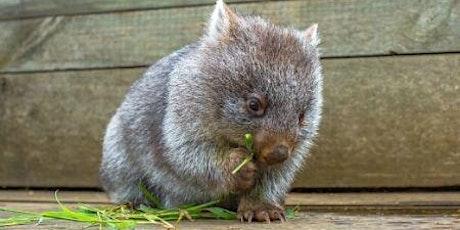 Wild Australia Wildlife Show tickets
