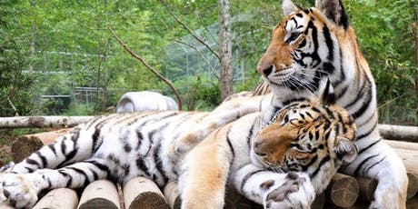 Have a Heart for the Wild Cats at Wild Felid Advocacy Center tickets